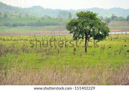 Single tree  - stock photo
