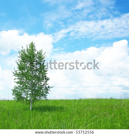 Single tree and green field. - stock photo