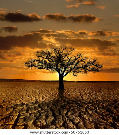Single tree dying in a cracked land because of pollution and global warming - stock photo