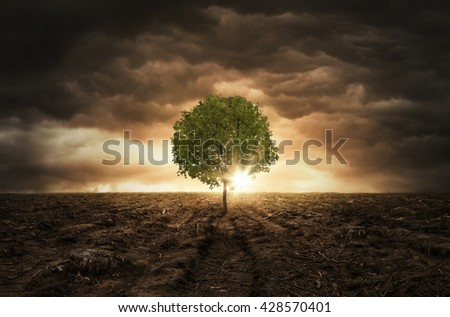 Single tree growing left on the chopped out forest over dramatic sky with copy space