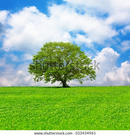 Single tree in a green field and cloudy blue sky - stock photo
