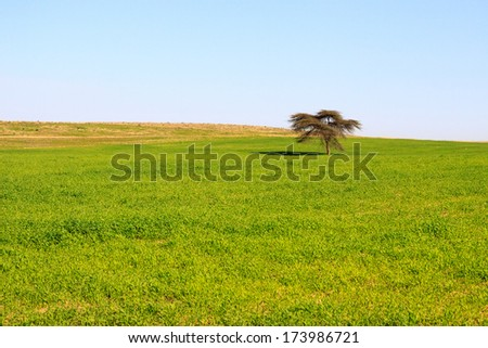 Single tree in a green meadow - stock photo