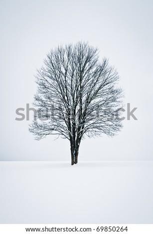 Single Tree in a solitude Winter Landscape - stock photo