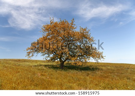 Single tree in autumn with blue sky