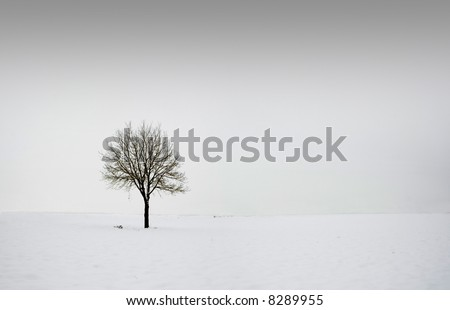 Single tree in field during winter 2 - stock photo