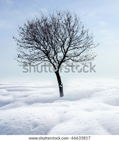 Single tree in frost - stock photo
