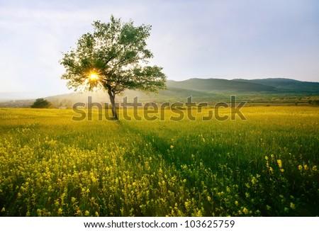 single tree in sunny farmland near village; hdr sunset landscape - stock photo