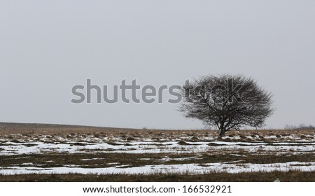 Single tree in the field at the end of winter - stock photo