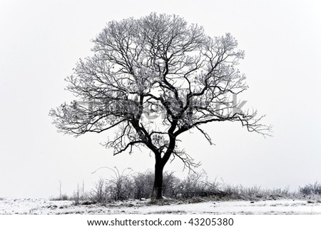 Single tree in the snowy landscape. - stock photo