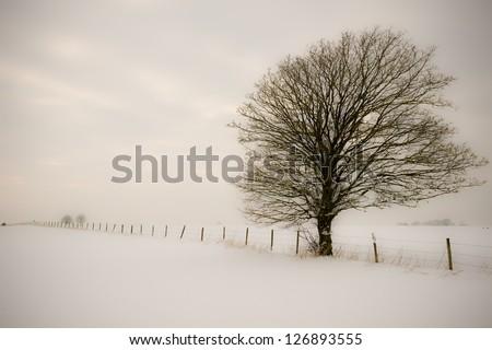 Single tree in winter - stock photo