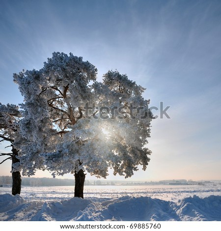 Single tree in winter weather at sunset - stock photo
