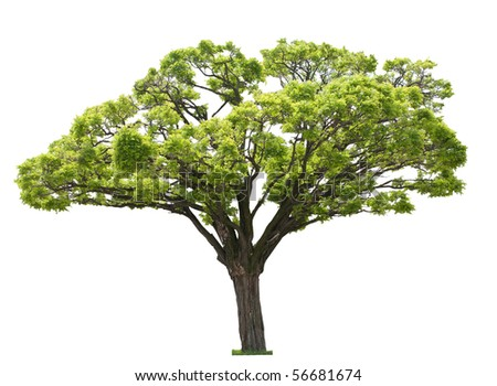 single tree isolated on white - stock photo