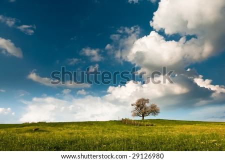single tree on field in spring with blue sky and clouds