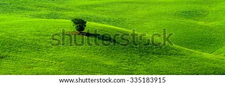 single tree on grass field - stock photo