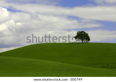 Single tree on grassy hill - stock photo