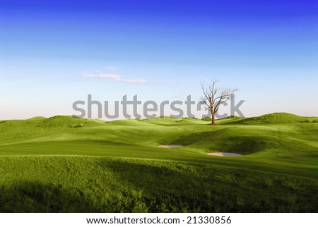 Single tree on green golf course - stock photo