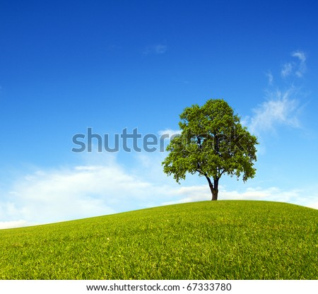 Single tree on hill and blue sky - stock photo