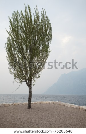 single tree on lake garda in italy on a calm day