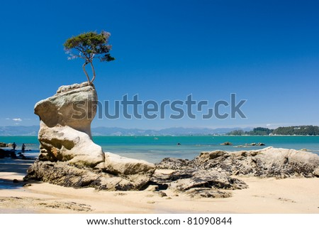 Single tree on the rock at the beach - stock photo