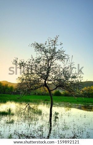 Single tree reflected in the water. - stock photo