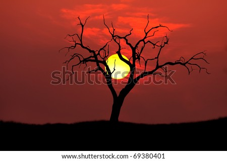 single tree silhouette with round setting sun on the african plains - stock photo
