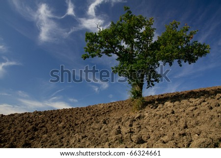 Single tree standing in a plain field