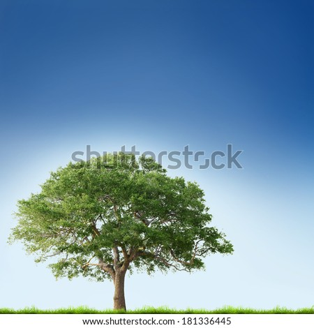 Single tree with green grass over blue sky background