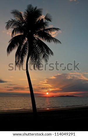 Single Tropical Palm at Sunset - stock photo