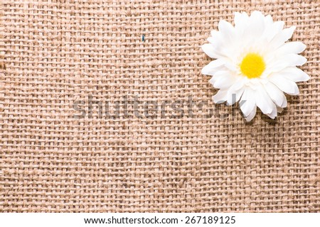 Single white daisy flower on a burlap background, useful as invitation card and greetings card - stock photo