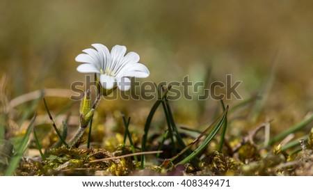 single white flower - stock photo
