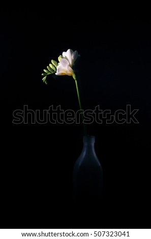 Single white freesia in a bottle