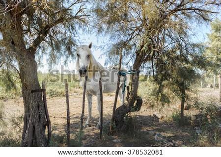Single white horse on the green - stock photo