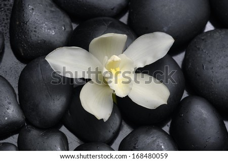 Single white orchid with therapy stones