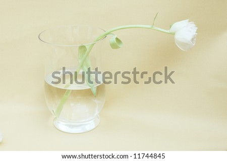 single white tulip in a glass vase against light brown background