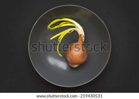 single whole onion with green sprouts in gray bowl