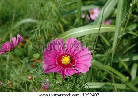 SIngle wildflower - stock photo