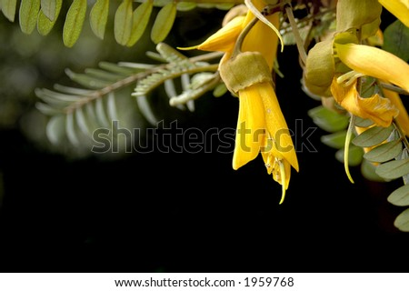 Single Yellow Bloom - stock photo