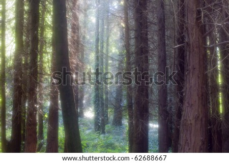 Sintra Magical Forest, Portugal - stock photo