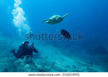 SIPADAN, SABAH, MALAYSIA - Dec 21, 2013 - A scuba diver capturing underwater photos of a sea turtle swimming at Sipadan dive site, Malaysia.