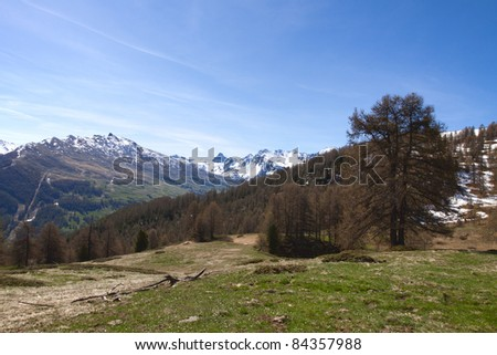 Site of St Simon's wood, park of Queyras, department of the high Alps, France