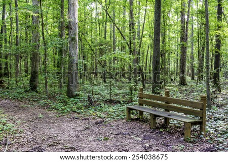 Sitting bench in an Alabama forest - stock photo
