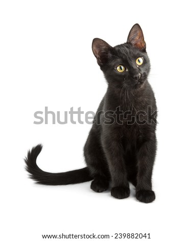 sitting black cat looks up over white - stock photo