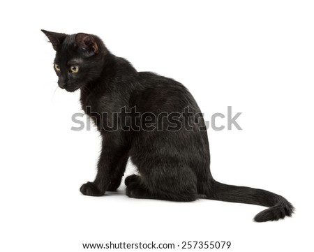 sitting black cat, shot on white background - stock photo