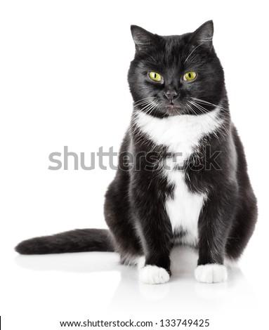 sitting black cat with yellow eye isolated on white background - stock photo