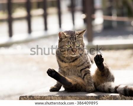 Sitting cat - stock photo