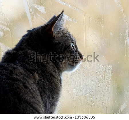 Sitting cat and watching through the window on a yellow light blur window background with rain drops, watching cat close up, yellow background with rain drops and cat,looking right,autumn rain and cat - stock photo