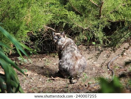 Sitting cat in park of Madrid - stock photo