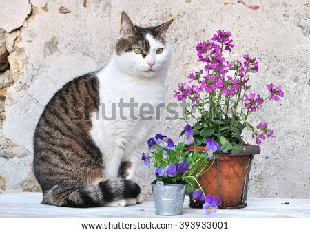 sitting cat next to flower pots on a garden table  - stock photo