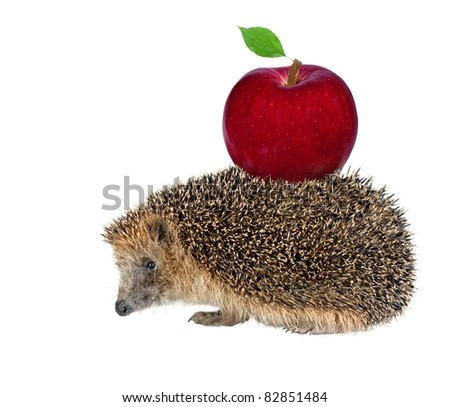 sitting hedgehog with apple on white background - stock photo