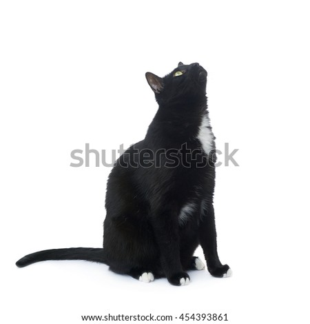 Sitting on the floor black cat isolated over the white background - stock photo